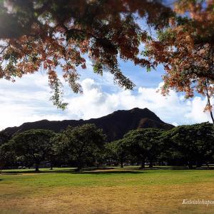 カピオラ二公園のシャワーツリー