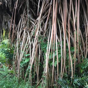 ハワイの伝説- Punaの話