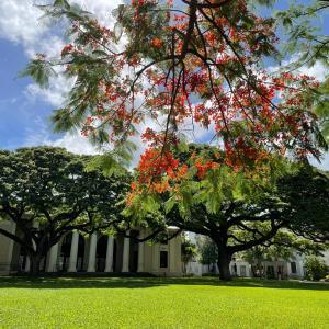 ハワイ州立図書館へ。