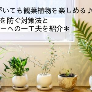 赤ちゃんがいても観葉植物を楽しめる♪いたずらを防ぐ対策法と鉢カバーへの一工夫を紹介♪