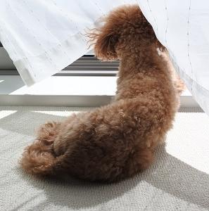窓辺でお昼寝zzz。