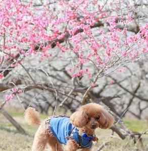 三春へお出掛け~梅ロード