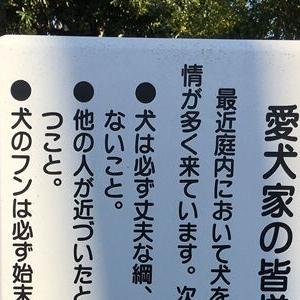 国会前庭(東京都・千代田区)