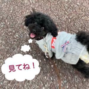 お散歩動画〜♪