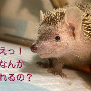 冬眠直前のてんちゃん!