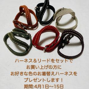 だらりんショップ15周年記念!