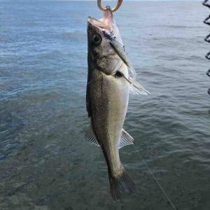 貴重な平日釣行も水潮で負け試合