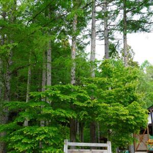 新緑が眩し過ぎる素敵なキャンプ場【一色の森キャンプ場】