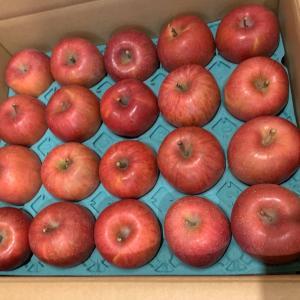 今年もりんごが届きました!