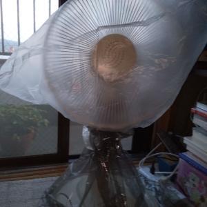 6年ぶりの扇風機