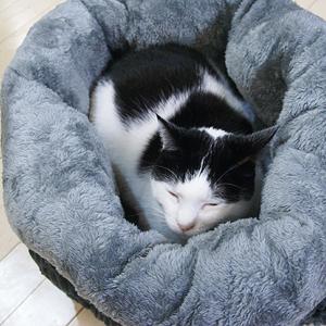 猫ベッド ぬくぬくペットベッド ミー君のベッドこれに替えました!