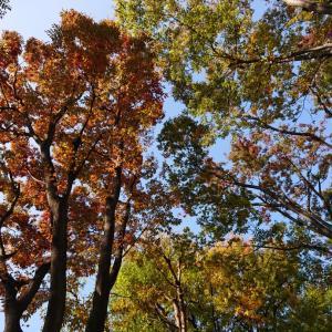 心癒される秋は、すぐ身近に