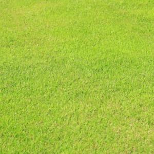 人生で一度きりの『芝生アタマ』