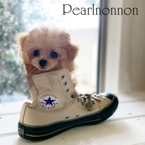 靴の中にすっぽり・・・