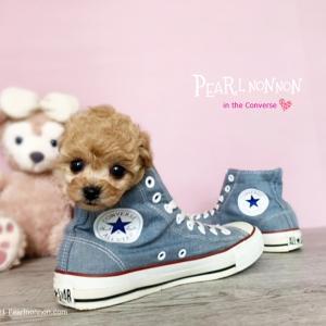恒例の ♡ in the Converse