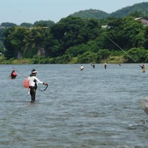2020年の鮎の友釣り!ここ4年間で最悪!救いはただ一つ桂川で釣れたことです!