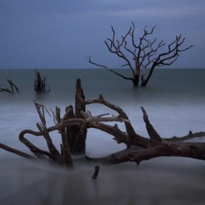 朽ちた枯れ木が骨のように見えることから「骨捨て場」!浸食作用は、自然サイクル!
