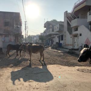 インドのクリスマス(とくに西と中央)