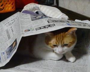 ももちゃん(猫)・・・アニマルセラピー~