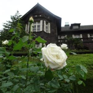 バラ色の・・・・・・っと言いますが~。旧古河庭園の洋館と薔薇の眺めて~