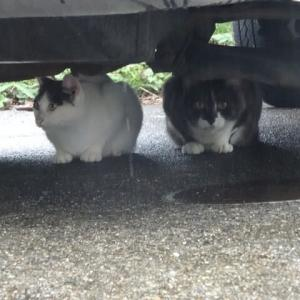 お友達になりました(猫ちゃん)・・・家庭菜園にて~