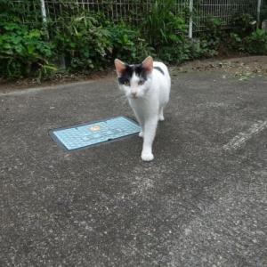 アサギマダラ、猫ちゃん、収穫~休みの日は家庭菜園で・・・休養?