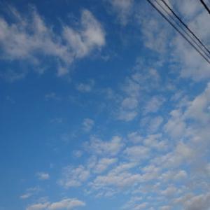 朝・花の眺め~空を眺めながらバス停へ~