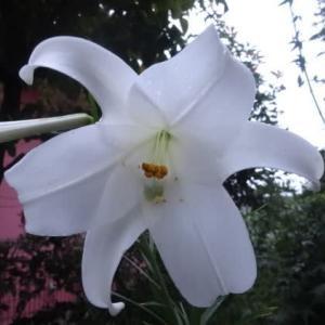 朝・メダカの動きを眺めたり花を眺めたり~気分転換。