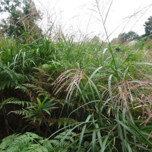 秋の七草~季節を感じて。萩、フジバカマ、ススキ・・・