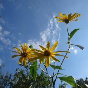 家庭菜園の秋~自然の風景・・・