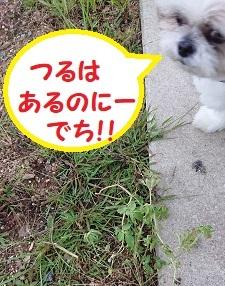 公園のスイカがなくなったぁ~でち(◎_◎;)
