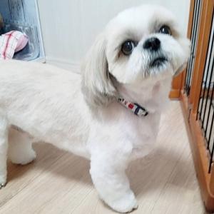 モサ犬レイ、別犬になりました°˖✧◝(⁰▿⁰)◜✧˖°