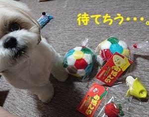 やったでち!!新しいボール買って貰ったでち(^_^)v
