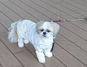犬のお巡りさん、頼んだよ(^^ゞ