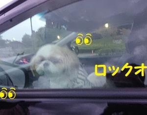 車の中からワンコラでち(◎_◎;)