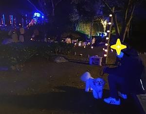 夜の万葉公園に行ってみた。「万葉竹灯篭」!!