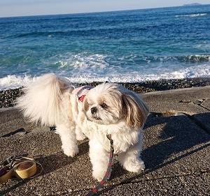 お天気いいから海散歩~🎶