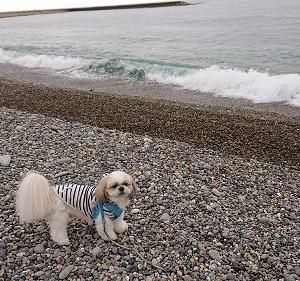 海散歩とローカル番組(^O^)/