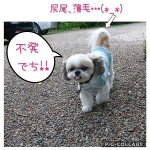 雨男は誰だ!!