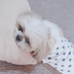 犬だけど狸寝入り💤。