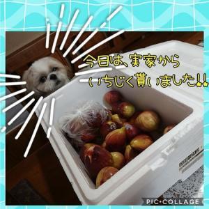今日もボクちゃん・・・食べれないし―(-_-メ)