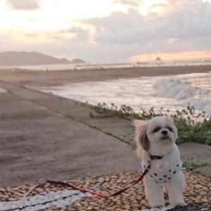 荒れた日本海、レイ散歩🎶
