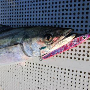 ジギング 西岡遊魚 2021/07/31