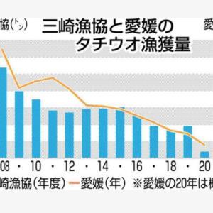 タチウオ記録的不漁 (18日付けた愛媛新聞)