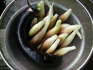 今年最後のミョウガ収穫?茄子とミョウガの紫葉漬けに!