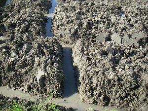 田んぼの秋起こし後の溝繋ぎと捨て溝掘り