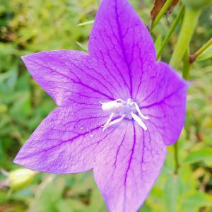 入笠山「秋の花便り」