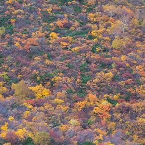 中級山岳の紅葉も終わり、県境の紅葉へ