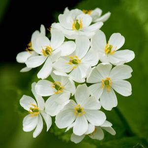 いよいよ山のお花はランの季節です、本日2種探しに行ってきます。コクラン・タシロランの初物です。