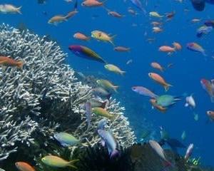 レンボンガン島のサンゴ礁は最高です!